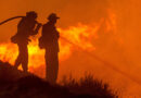 Mais de 24.000 hectares arderam nos primeiros sete meses do ano