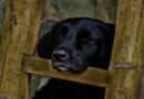 Regulamento do bem-estar animal de Amares em discussão pública a partir de hoje