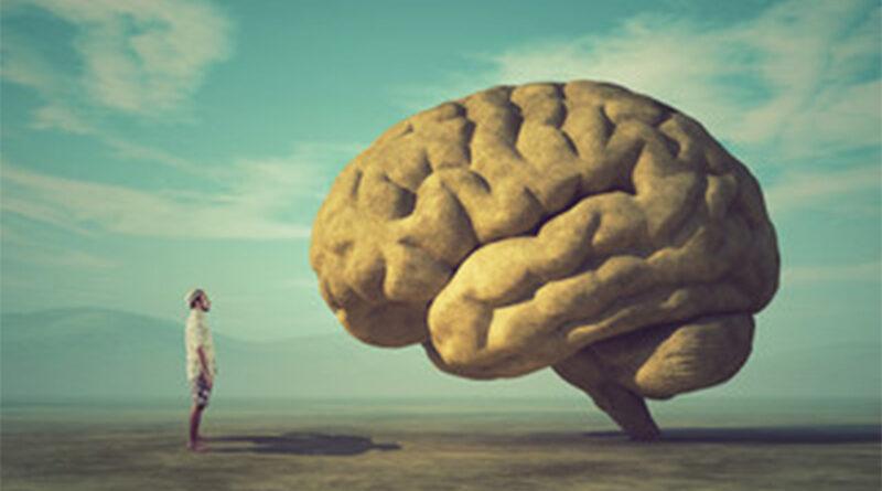 'Mini cérebros' criados em laboratório sugerem mutação que revolucionou a mente humana