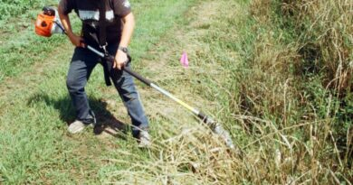 Governo prevê prolongar prazo para limpeza de terrenos até 15 de maio