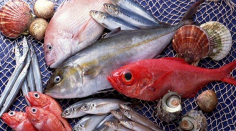 Análise dos olhos de um peixe acabou numa impressionante descoberta evolucionária