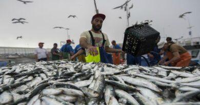 Sherpa do Mar celebra o II Encontro Universidade-Empresa com oradores destacados na temática das pescas